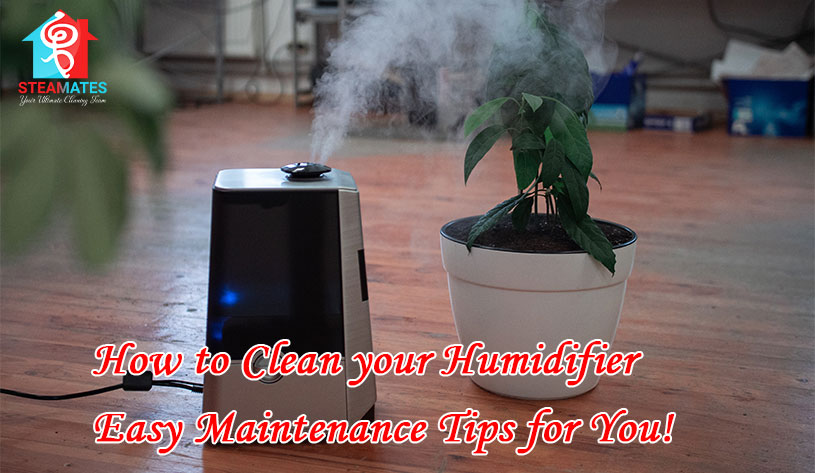 How to Clean your Humidifier Easy Maintenance Tips for You!