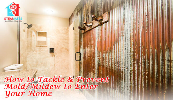 How to Tackle & Prevent Mold Mildew to Enter Your Home